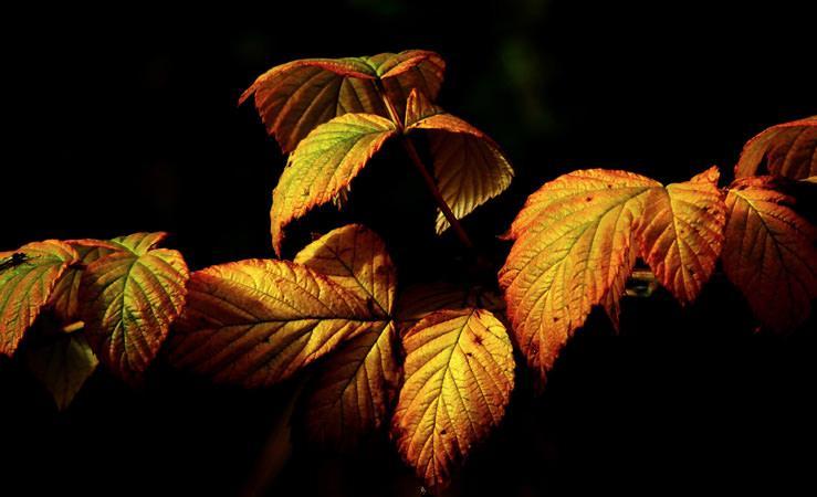 Lecologico contra a alergia ao outono