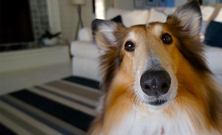 Aspirapolvere Hepa: un aiuto contro le allergie agli animali domestici