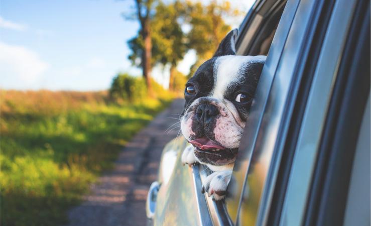 De vacaciones con tu perro